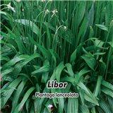 Jitrocel - Libor - semena 1 g