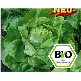 http://www.semena-rostliny.cz/10648-thickbox/hlavkovy-salat-ovation-bio-semena-osivo.jpg