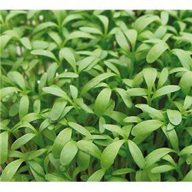 http://www.semena-rostliny.cz/10650-thickbox/rericha-sprint-bio-semena-osivo.jpg