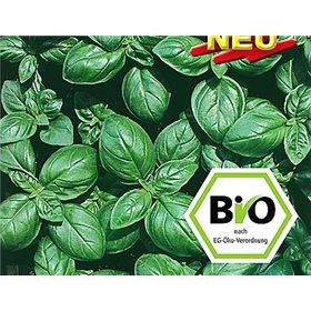 http://www.semena-rostliny.cz/10668-thickbox/bazalka-genoveser-bio-semena-osivo.jpg