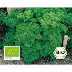 http://www.semena-rostliny.cz/10670-thickbox/petrzel-grandeur-bio-semena-osivo.jpg