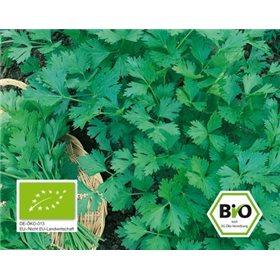 http://www.semena-rostliny.cz/10672-thickbox/petrzel-gigante-d-italia-bio-semena-osivo.jpg