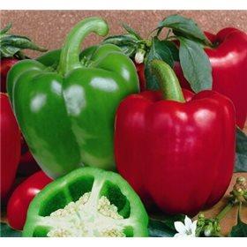 http://www.semena-rostliny.cz/10674-thickbox/paprika-yolo-wonder.jpg