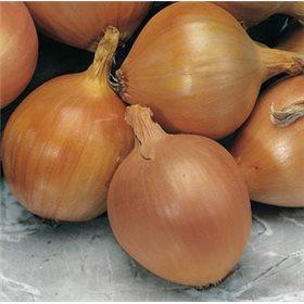 http://www.semena-rostliny.cz/10683-thickbox/cibule-zittauer-zluta.jpg