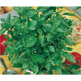 http://www.semena-rostliny.cz/10687-thickbox/bazalka-citronova-semena.jpg