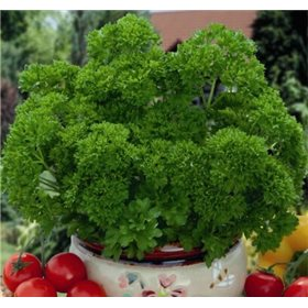http://www.semena-rostliny.cz/10692-thickbox/petrzel-mooskrause-2.jpg