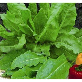 http://www.semena-rostliny.cz/10694-thickbox/sovik-vicelety.jpg
