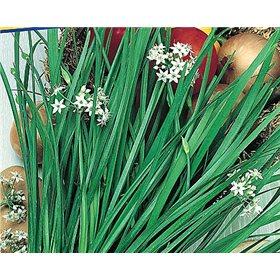 http://www.semena-rostliny.cz/10720-thickbox/cesnek-neko-semena-cesneku.jpg