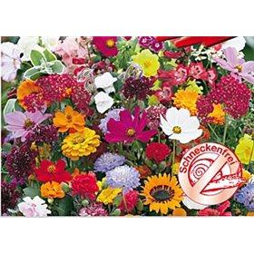 http://www.semena-rostliny.cz/10722-thickbox/kvetinova-symfonie-rezistentni-snekum.jpg