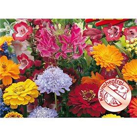 http://www.semena-rostliny.cz/10724-thickbox/kvetinova-symfonie-rezistentni-kralikum.jpg
