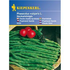 http://www.semena-rostliny.cz/11104-thickbox/popnav-fazole-neckarknigin-semena-fazole.jpg