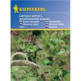 http://www.semena-rostliny.cz/11126-thickbox/listov-salt-amerik-semena-saltu-listovho.jpg