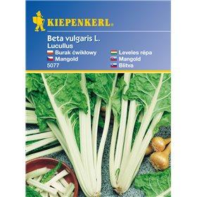 http://www.semena-rostliny.cz/11131-thickbox/mangold-lukullus-semena-mangoldu.jpg