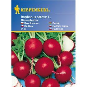http://www.semena-rostliny.cz/11167-thickbox/edkvika-obrovsk-mslov-semena-edkviek.jpg
