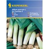 Pórek De Carentan 2 - semena pórku