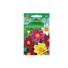 http://www.semena-rostliny.cz/11816-thickbox/dahlia-pinnata-jil-inka-je-sm.jpg