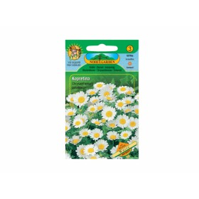 http://www.semena-rostliny.cz/11931-thickbox/chrysant-pal-kopretina-b.jpg