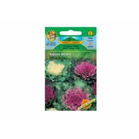 http://www.semena-rostliny.cz/11935-thickbox/kapusta-okrasn.jpg