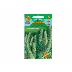 http://www.semena-rostliny.cz/12131-thickbox/phalaris-can-lesknice-okr-tr.jpg