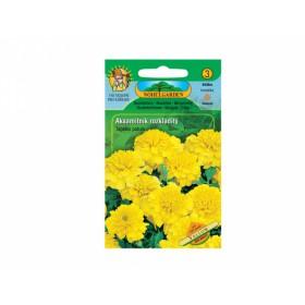 http://www.semena-rostliny.cz/12229-thickbox/tagetes-pat-aks-n-pln-lll.jpg