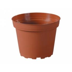 http://www.semena-rostliny.cz/12304-thickbox/kva-t-classic-tod-d10cm-leh-p.jpg