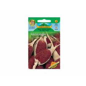 http://www.semena-rostliny.cz/12319-thickbox/zea-mays-multic-kuk-jahodov.jpg