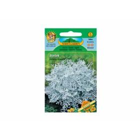 http://www.semena-rostliny.cz/12430-thickbox/senecio-bicolor-staratek.jpg