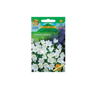 http://www.semena-rostliny.cz/12468-thickbox/campanula-carp-zvonek-karp.jpg