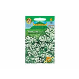 http://www.semena-rostliny.cz/12488-thickbox/gypsophila-pan-l-ter-lat-b.jpg