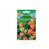 Mochyně peruánská třešen Orange