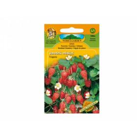 http://www.semena-rostliny.cz/13631-thickbox/jahodn-k-ma-s-atn.jpg