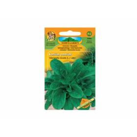 http://www.semena-rostliny.cz/13808-thickbox/kozl-atek-poln-atek-deutscher.jpg