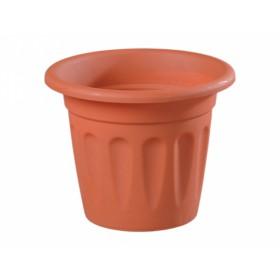 http://www.semena-rostliny.cz/14068-thickbox/kva-t-primavera-d40x28h-h.jpg