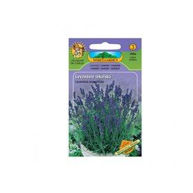 http://www.semena-rostliny.cz/14209-thickbox/levandule-l-k-l.jpg