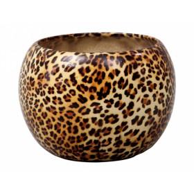 http://www.semena-rostliny.cz/14900-thickbox/obal-manes-panter-d16cm-lesk.jpg