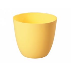 http://www.semena-rostliny.cz/14996-thickbox/obal-patricie-d11x10h.jpg