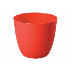 http://www.semena-rostliny.cz/15025-thickbox/obal-patricie-d18x16h.jpg