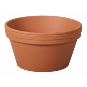 http://www.semena-rostliny.cz/17163-thickbox/l-ard-rondo-d20x11h-kul-sp.jpg