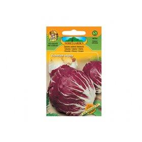 http://www.semena-rostliny.cz/17422-thickbox/asekanka-sal-hl-v-ate.jpg