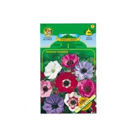 http://www.semena-rostliny.cz/17575-thickbox/anemone-de-ca-sasan-10ks-jpcc.jpg