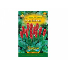 http://www.semena-rostliny.cz/17581-thickbox/arum-italicum-aron-2ks-jpdd.jpg