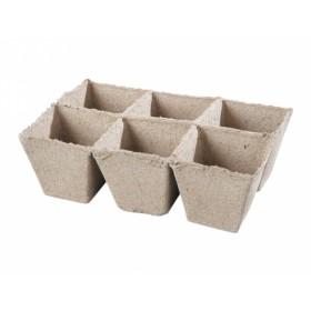 http://www.semena-rostliny.cz/17849-thickbox/kva-t-ral-6ks-8x8cm.jpg