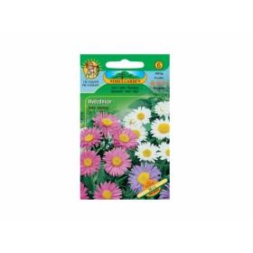 http://www.semena-rostliny.cz/18070-thickbox/aster-alpinus-hva-zdice-alp.jpg