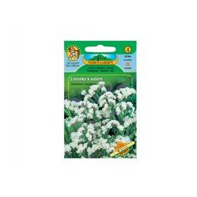 http://www.semena-rostliny.cz/18171-thickbox/limonium-sin-limonka-b.jpg