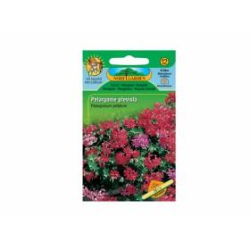 http://www.semena-rostliny.cz/18217-thickbox/pelargonium-pel-mul-k-pn-sm.jpg