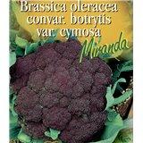 Brokolice Miranda
