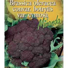 http://www.semena-rostliny.cz/21451-thickbox/brokolice-miranda.jpg