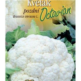 http://www.semena-rostliny.cz/21647-thickbox/kva-t-k-p-octavian.jpg