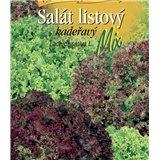 Salát listový kadeřavý mix