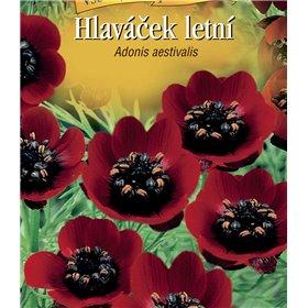 http://www.semena-rostliny.cz/22295-thickbox/adonis-aest-hlav-atek-ate.jpg